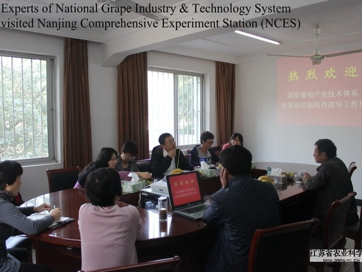 Experts of National Grape Industry & Technology System visited Nanjing Comprehensive Experiment Station (NCES)
