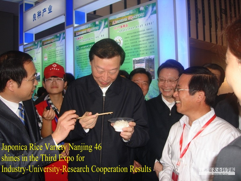 Japonica Rice Variety Nanjing 46 shines in the Third Expo for Industry-University-Research Cooperation Results