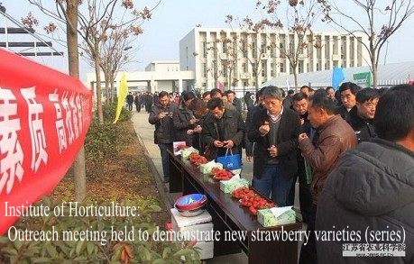 Institute of Horticulture: Outreach meeting held to demonstrate new strawberry varieties (series)