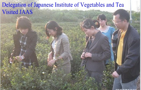 Delegation of Japanese Institute of Vegetables and Tea Visited JAAS