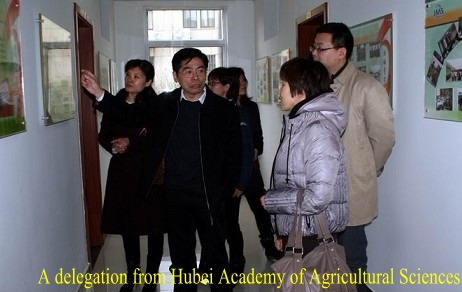 A delegation from Hubei Academy of Agricultural Sciences