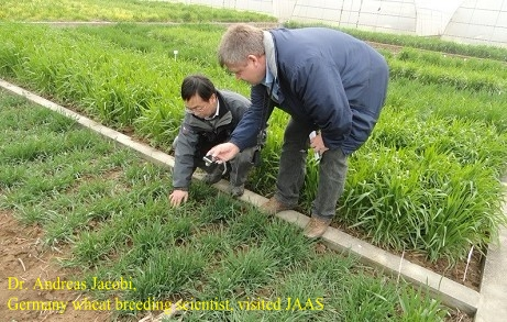 Dr. Andreas Jacobi, Germany wheat breeding scientist, visited JAAS
