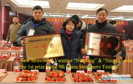 "New Strawberry Varieties ""Ningfeng"" & ""Ningyu"" won the 1st prize in the 9th China Strawberry Festival"