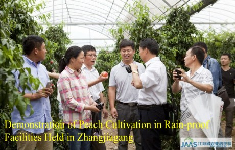 Demonstration of Peach Cultivation in Rain-proof Facilities Held in Zhangjiagang