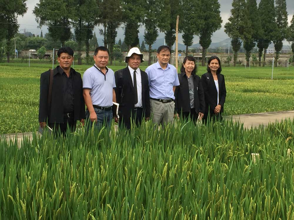 <p>Scientists of Field and Renewable Energy Crops Research Institute of Department of Agriculture, Thailand, visited JAAS</p>